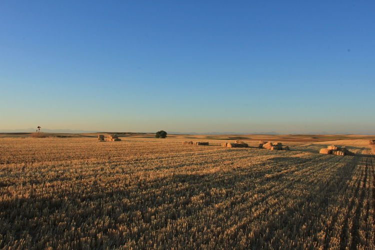 Scenic view of cultivated land against clear sky