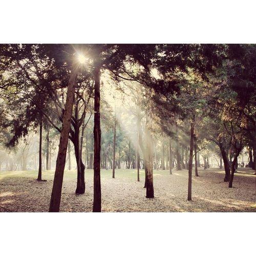 🍂🌳👌 Enjoying The Sun