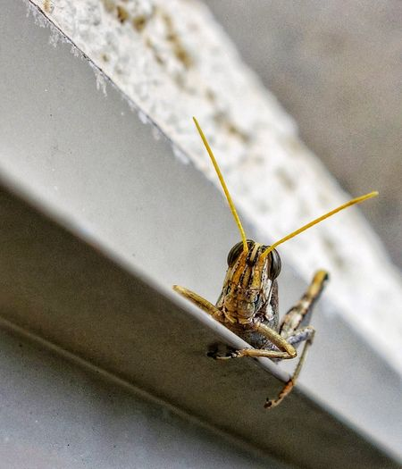 Hi! Insect