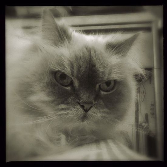 Hipstamatic Hipstadreamers Sergio  Claunch72 Blackandwhite Mondo_gatto Bnw_toscana Igw_vsco Ig_italia Ig_toscana Ig_tuscany Ig_firenze Monochrome Carpediem_animals Bnw_cats Cat Bnw_captures Bnwcat Hipstacat