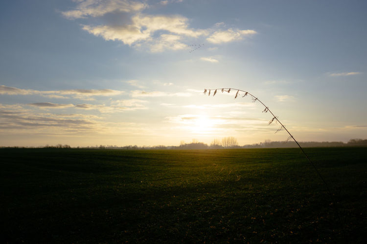 Silhouette birds on field against sky at sunset