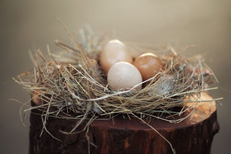 Closeup group of the eggs on the bird nest. Easter festival. Easter Natural Farm Organic Freshness Egg Animal Nest Animal Egg No People Nature Food Fragility Food And Drink Vulnerability  Nest Egg Indoors  Bird Nest New Life Beginnings Group Of Objects Bird