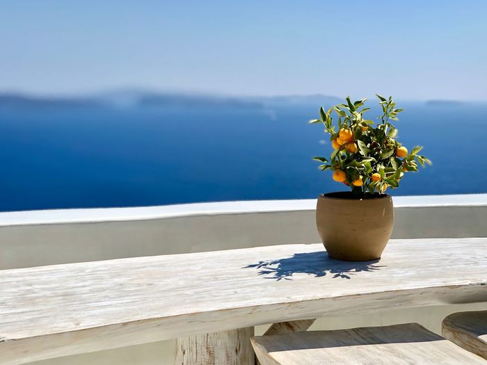 Potted plant on table against sea during sunny day