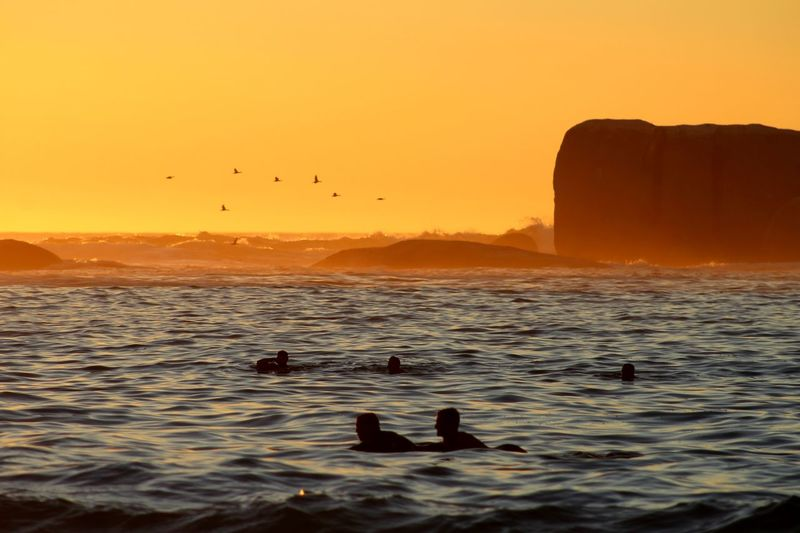 Cape Town, South Africa Clifton Animal Animal Themes Animal Wildlife Animals In The Wild Beauty In Nature Bird Flock Of Birds Flying Group Of Animals Horizon Over Water Nature No People Orange Color Scenics - Nature Sea Silhouette Sky Sunset Tranquil Scene Tranquility Vertebrate Water