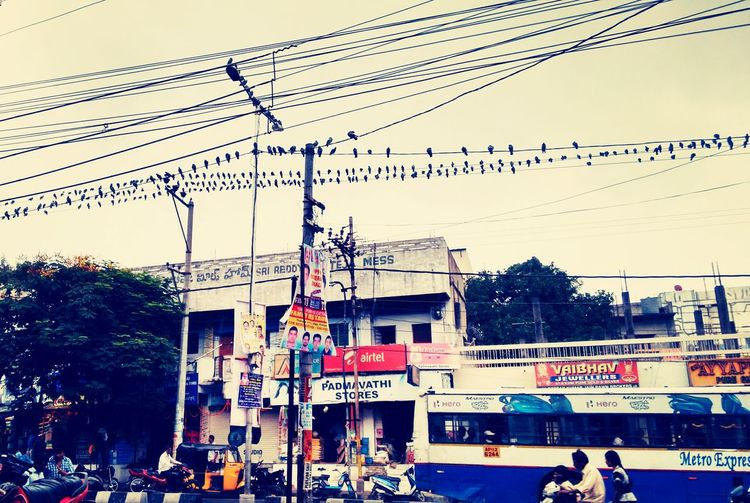 Mass morning sitting for birds :P