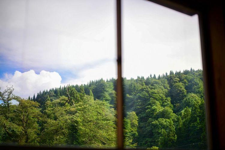 窓からのぞく里山。 Plant Tree Growth Sky Window Green Color Beauty In Nature Nature Forest Tranquility Cloud - Sky Tranquil Scene Scenics - Nature Environment Land Non-urban Scene