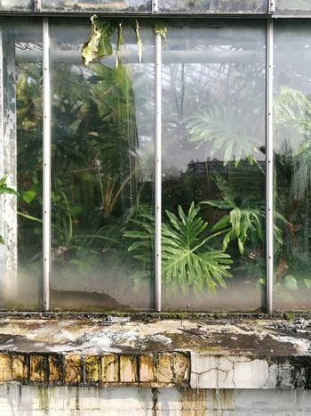 PalmHouse Palm Vegetation No People Day Window Architecture Outdoors Built Structure Water Growth Tree Building Exterior Nature