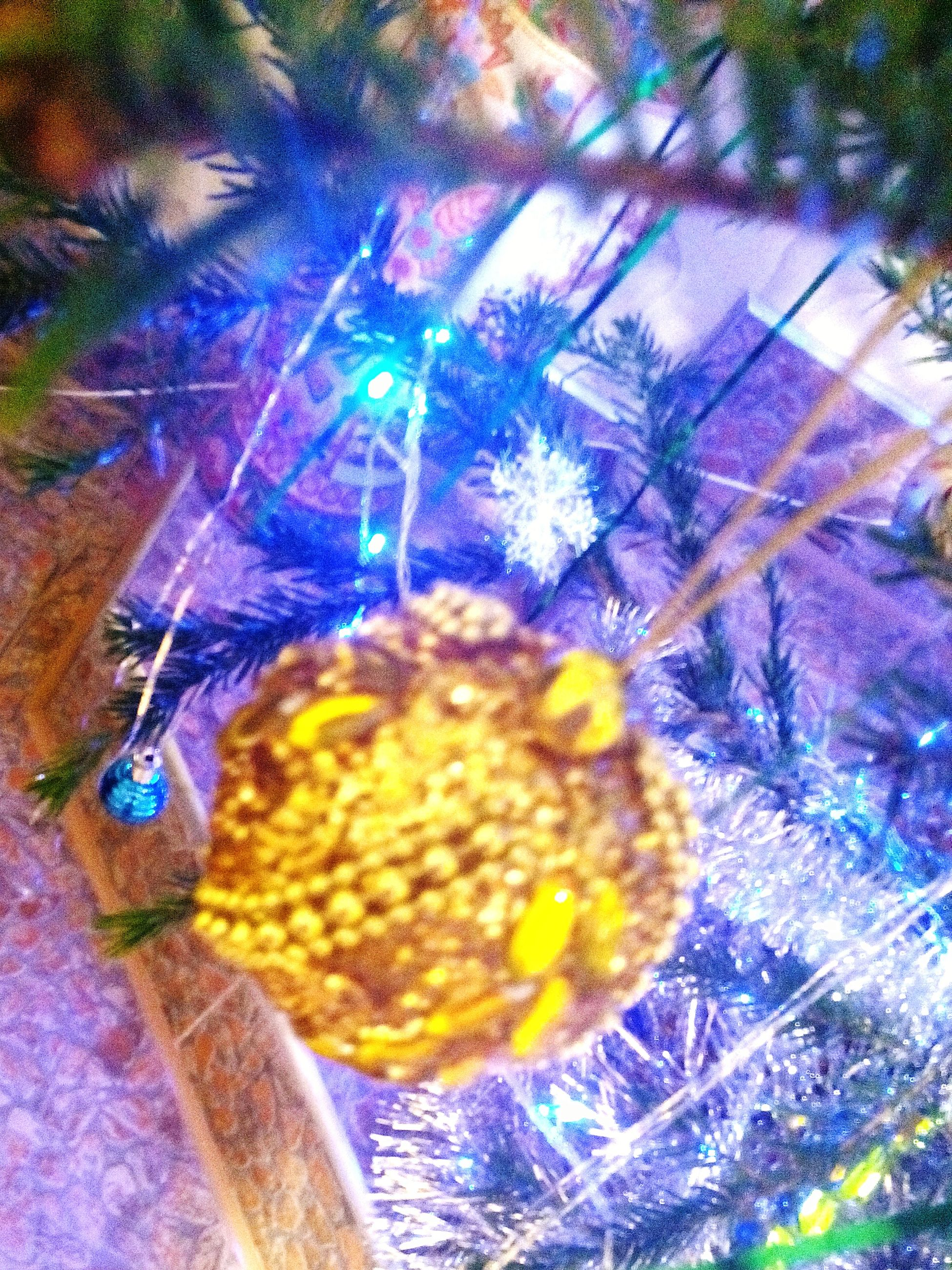 close-up, multi colored, freshness, yellow, flower, indoors, no people, blue, animal themes, fragility, nature, high angle view, day, decoration, focus on foreground, purple, selective focus, plant, fruit