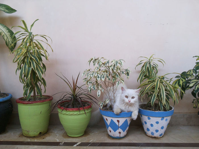 Portrait of cat by potted plants