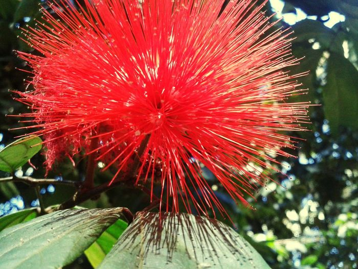 Bogotá Colors Flowers Jardin Botanico Destello De Sol