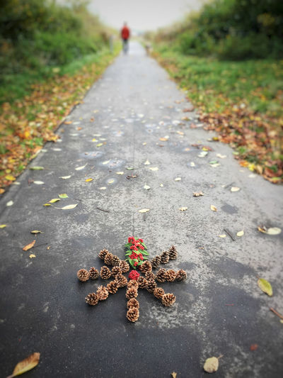 A flower made of pine cones and red berries Asphalt Fall Colors Missing You Ornament Path Red Road Autumn Beauty In Nature Close-up Day Decoration Fall Flower Shape Focus On Foreground Knækcancer Knækcancerblomst Leaf Nature Outdoors Pine Cone Pinecone Real People Street The Way Forward