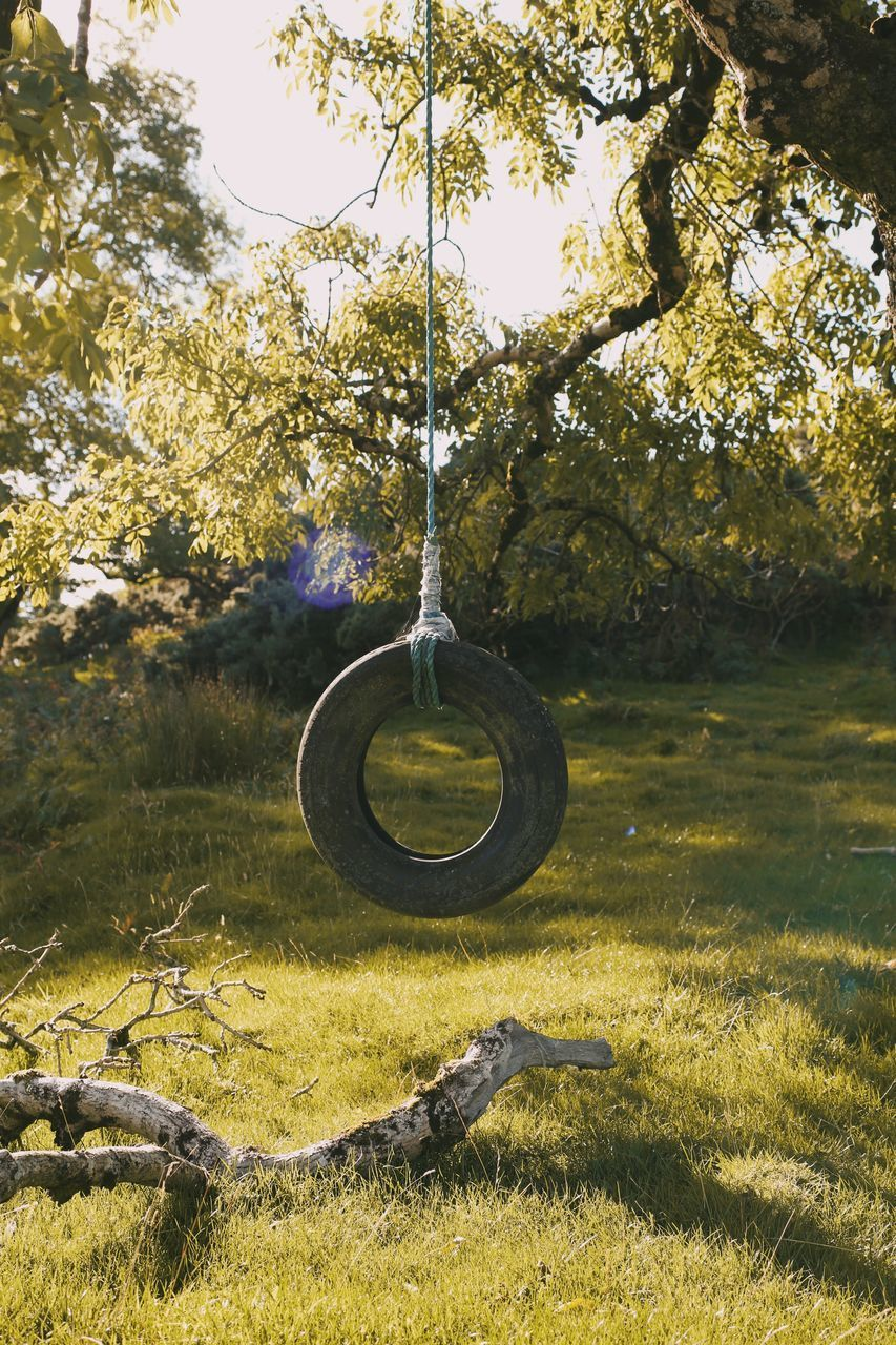 tree, plant, grass, hanging, land, nature, day, sunlight, no people, field, tranquility, branch, growth, shadow, outdoors, tree trunk, trunk, swing, green color, tranquil scene, wheel