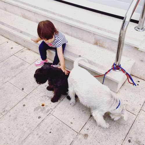 High Angle View Of Girl Playing With Poodle Puppies On Sidewalk