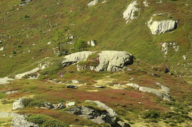 im Lötschental - Wallis - Schweiz Beauty In Nature Countryside Day Grass Grassland Green Green Color Landscape Lötschental Nature Non-urban Scene Outdoors Scenics Schweiz Solitude Switzerland Tranquil Scene Tranquility Wallis