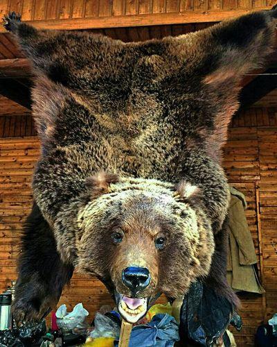 медведь шкура медвежья шкура Кремль в Измайлово измайловскийкремль Eye4photography  EyeEM Photos EyeEm Gallery Check This Out Bear
