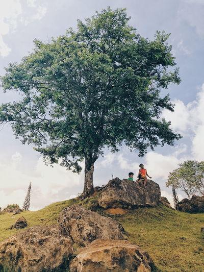 the lone tree.