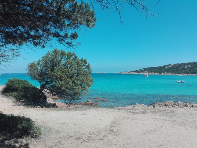 Spiaggia del povero Water Sea Tree Beach Tranquil Scene Tranquility Blue Clear Sky Calm Nature Ocean Vacations Sardegnaalmare Sardegna2016 Settembre2016 Spiaggia Sole Mare