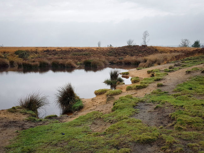 Outdoors Water Landscape No People Day Nature Tree Sky Landscapes Fog Mania Fog Country Yorkshire Autumn Collection Autumn Heather Freshness Beauty In Nature Agriculture Nature Field Orange Landscape_photography Norland Moor Moorland Lost In The Landscape