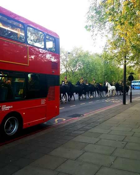 Outdoors Tree Morning Military Horse Riding Horse Bus Transport Way Of Transport Travel