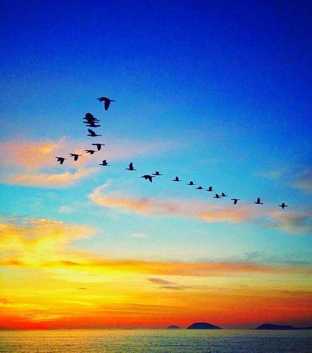 Like the present life, and enjoy. Enjoying Life Dreaming Animals Flying Traveling China Like
