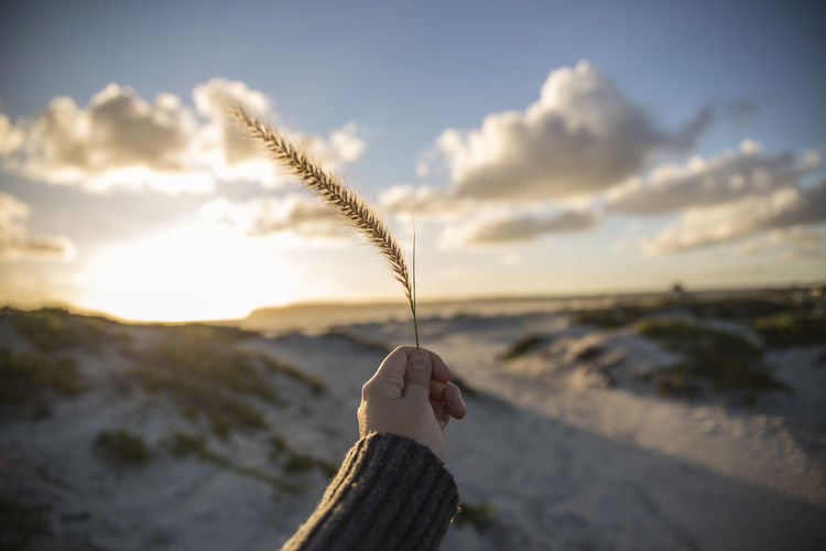 Cropped image of hand holding reed at beach against sky