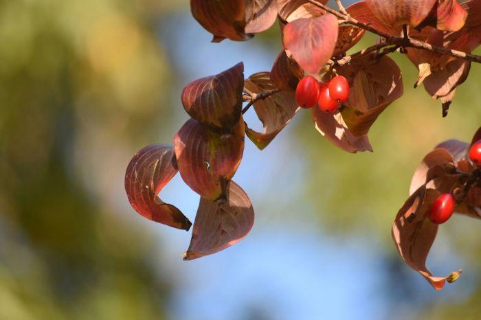 Fall Colors Autamn Nature