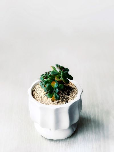 White Background Freshness No People Bowl Indoors  Legume Family Close-up Day Shot On IPhone IPhoneography Colors Plant Desk Decoration Illuminated Color Of Life Art Is Everywhere