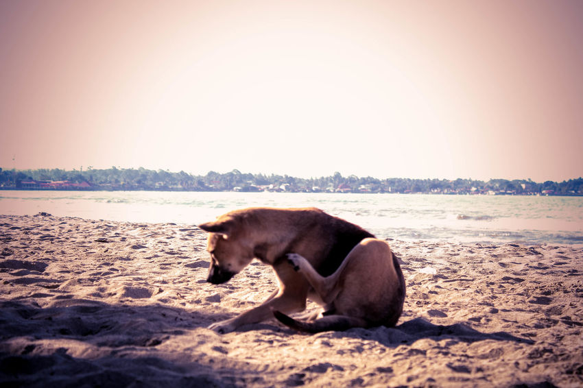 Animal Themes Beach Dog Dog Lover Dog Photography Eyeem Dog World OFFICIAL Photos Club 🐶🌍😄👍 Sand Sea Side View Eyeem Philippines EyeEm Best Shots Showcase: November Dog Art Dogs On The Beach Dog Are Fun Funy Dogs Dog Escape Pet Portraits