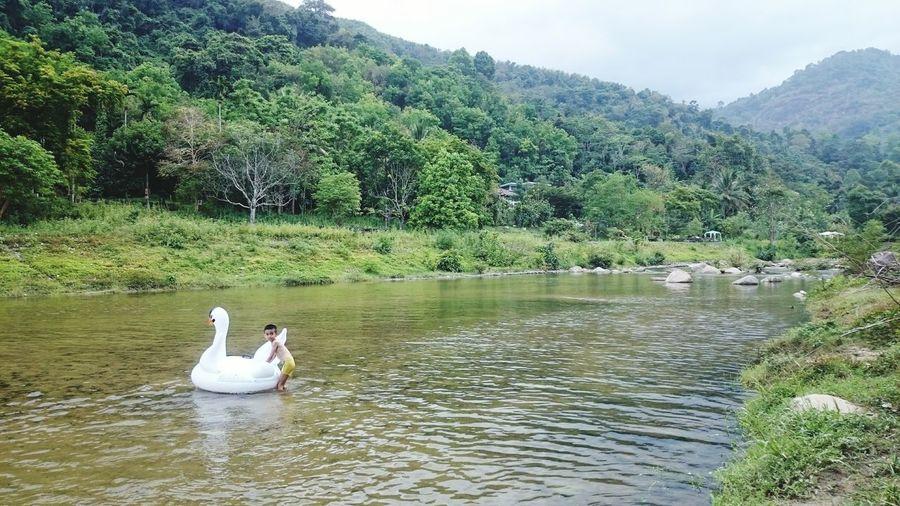 พาลูกมาเล่นน้ำ Swan Bird Water Swimming Lake Tree