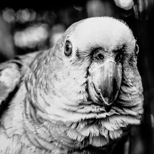 EyeEm Selects Bird Portrait Pets Looking At Camera Trapped Close-up