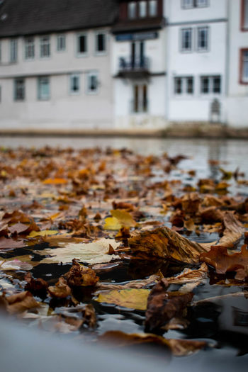 Close-up of fallen leaves in city during autumn