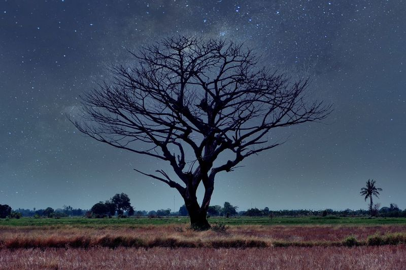 Bare tree on field against sky at night