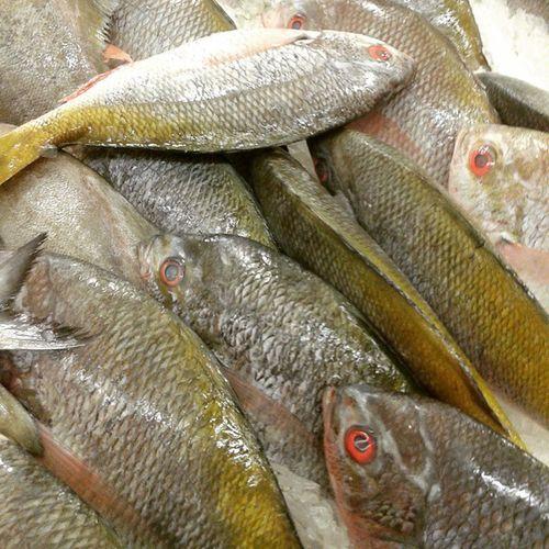 Fresh fish. Fish Ikan Ikansegar Freshfish makanansehat healthfoods