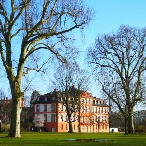 Trees in park with building in background