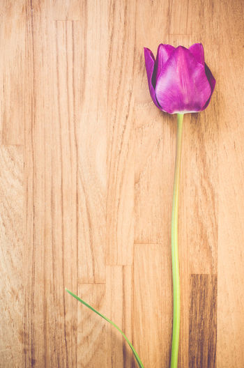 High angle view of purple tulip on wooden table
