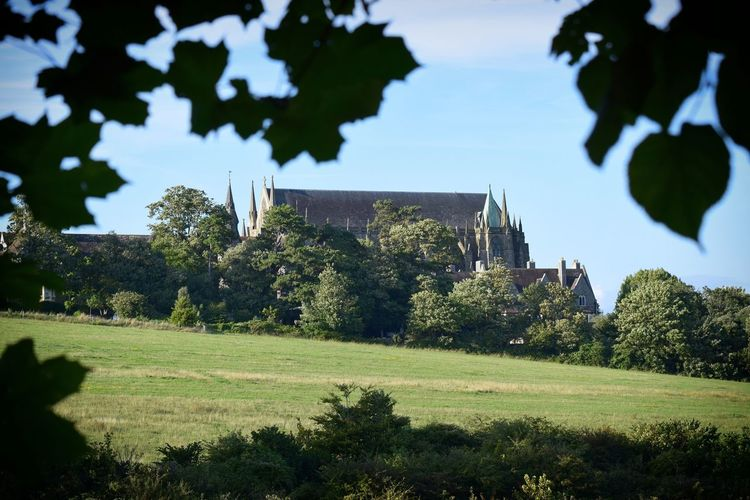 Lancing College through the trees Tree Day Architecture Outdoors Grass Nature Sky Low Angle View Evening Field Tree Beauty In Nature South Downs Grass Scenics Countryside Wildlife Photography Hills Lancing  Bush Branch Through The Trees Lancing College Chapel South Downs National Park