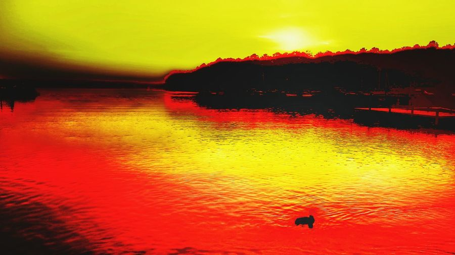 Tranquil Scene Sunset Water Scenics Tranquility Bird Tranquil Scene Reflection Silhouette Beauty In Nature Animal Themes Idyllic Orange Color Nature Vibrant Color Rippled Sky Waterfront Non-urban Scene Outdoors Romantic Sky I_💖EYEEM LIFES GOOD👍 Colors Of WATER Visual Feast