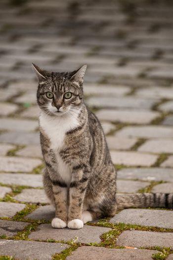 Cat Cat One Animal Domestic Animals Animal Themes Domestic Cat No People Outdoors Day Feline Haustier Kätzchen Katzenfoto кошка мурка Зверь