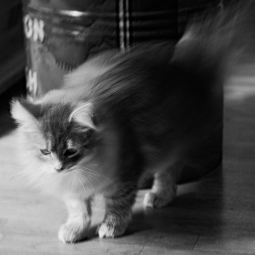 Black & White Blackandwhite Blackandwhite Photography Cat Cats Cat♡ Eye4photography  Eyem Cute Cats Eyemnaturelover Glitch