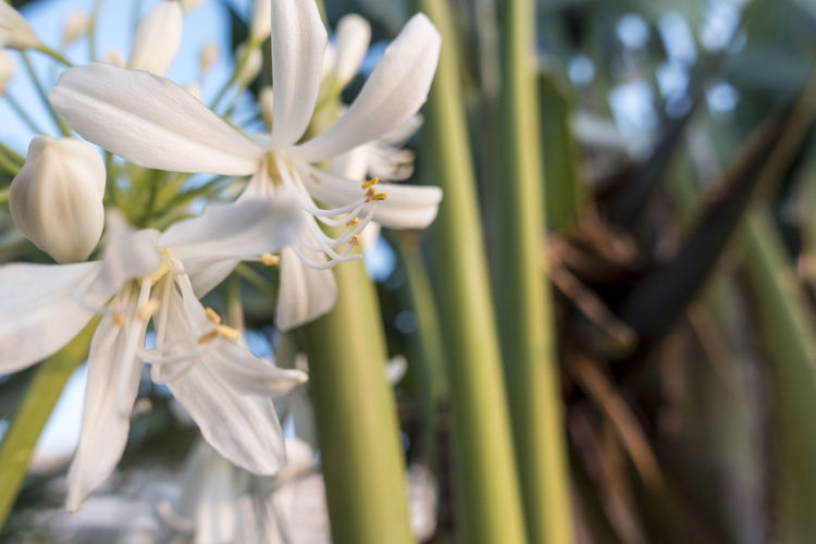Bamboo - Plant Beauty In Nature Close-up Day Field Flower Flower Head Flowering Plant Focus On Foreground Fragility Freshness Green Color Growth Nature No People Outdoors Petal Plant Selective Focus Tree Vulnerability  White Color