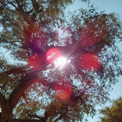 A Sunny Noon... In the shade Jaisalmer Desert Rajasthan India
