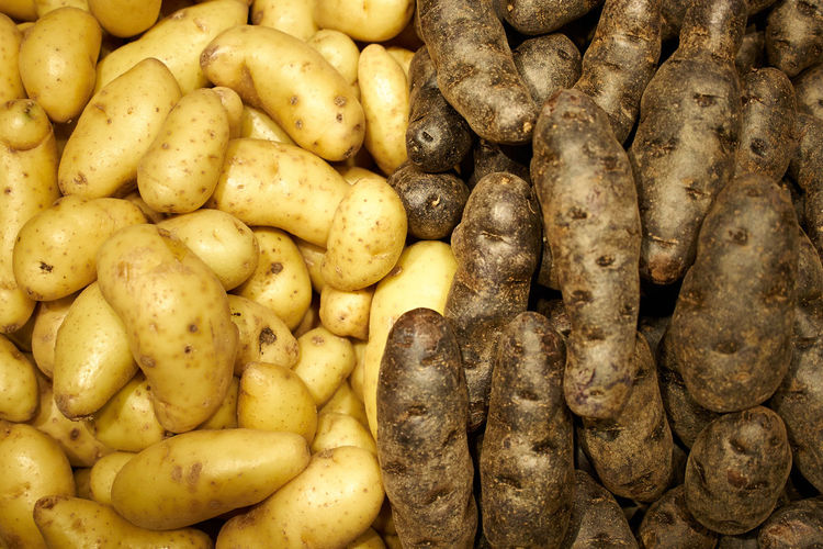 Dark and light colored potatoes. Potato Light Dark Vegetable Food Raw Food Raw Potato Large Group Of Objects Still Life No People Root Vegetable Overhead Shot Agriculture Pile