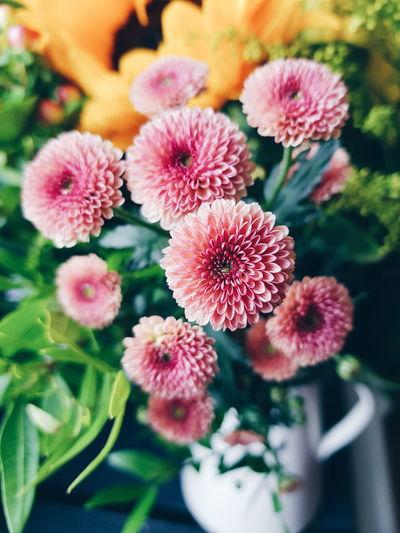 www.idjphotograp