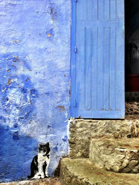Cats Blue Trompe-l'œil Medina Chefchaouen IPhoneography Street Art Graffiti Streetphotography Street Art/Graffiti Street Photography Cat Cats Of EyeEm Blue Wall Blue Color Morocco Pet Portraits