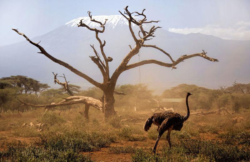 Animal on landscape