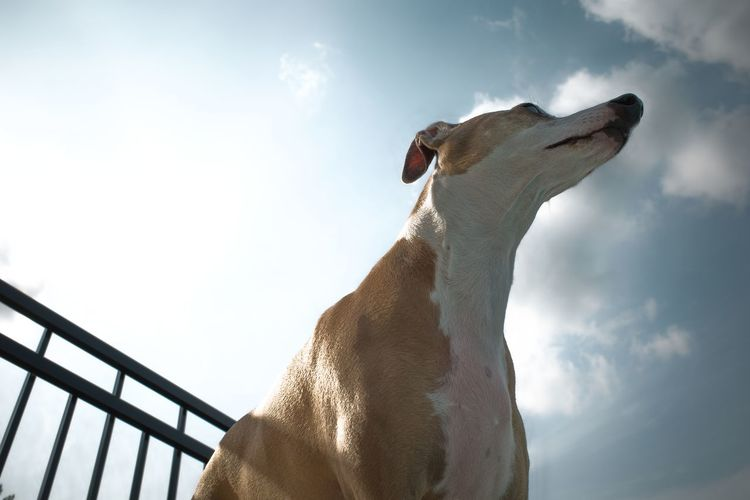 Low angle view of dog looking away against sky