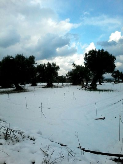 Snow ❄ Naturelovers Wintertime Cold Winter ❄⛄ Like Made In Puglia