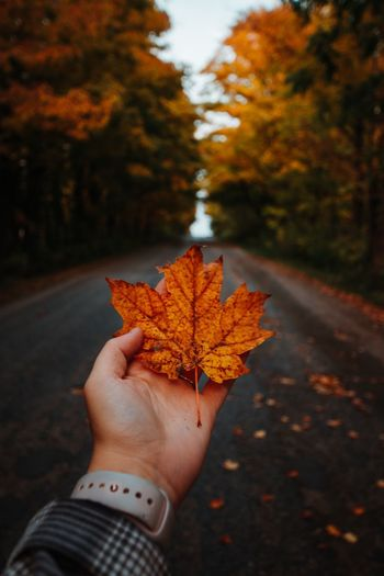 Cropped hand holding maple leaf on road