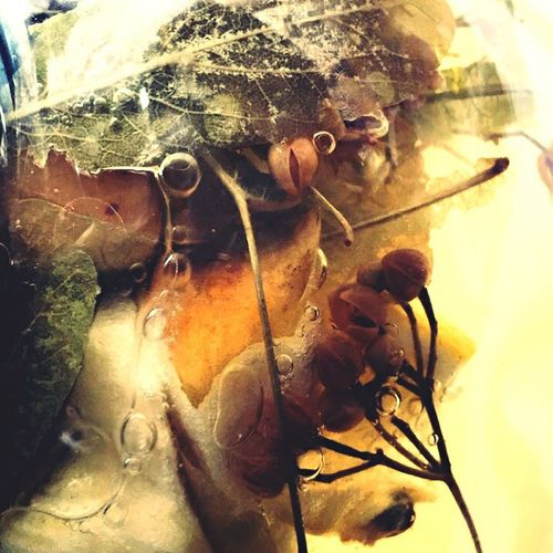 Herbtea Tea Relaxing EyeEm EyeEm Best Shots EyeEm Nature Lover Tea Time Taking Photos Colors Apple View Enjoying The View EyeEm Gallery Colours Of Autumn Healthy Lifestyle Nosick Showcase: February On A Health Kick Depht Of Field Freshness Fruit Foodporn