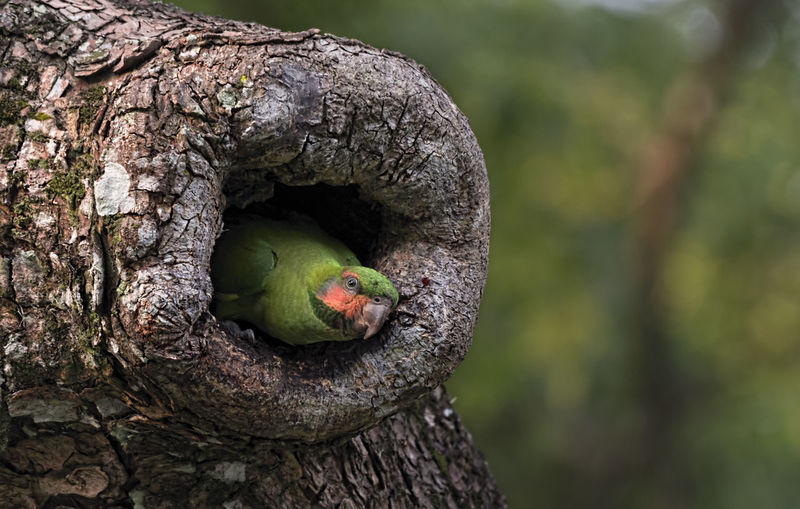 Long tailed Parakeet Animal Wildlife Tree Animals In The Wild Animal Themes Animal Bird Vertebrate Plant Day Trunk Tree Trunk One Animal Nature No People Close-up Outdoors Branch